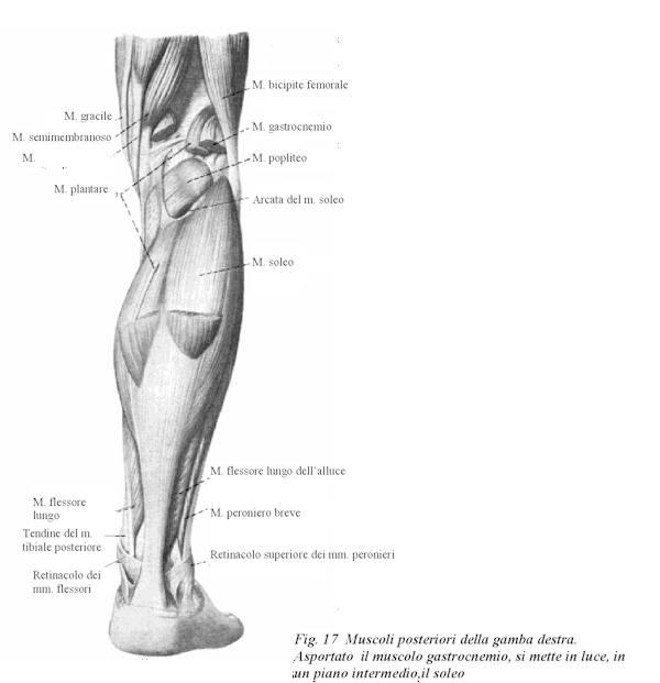 Varicosity 3 gradi a gravidanza